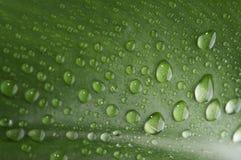 Tropfen mit grünem Gras stockbilder