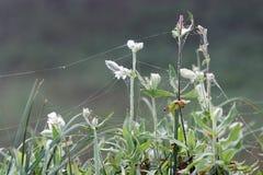 Tropfen und Spinnenspinnennetz auf Anlagen Stockbild