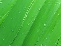 Tropfenwasserblätter Lizenzfreies Stockfoto