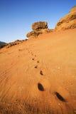 Trophée de chameau Images stock