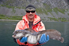 Trophée de pêche - poisson-chat photos libres de droits