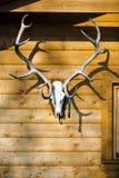 Trophée du morceau de gain sur le mur - grands andouillers de cerfs communs avec la médaille image stock