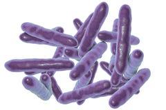Tropheryma whippleibakterier, den kausativa organismen av sjukdomen för Whipple ` s Royaltyfria Bilder