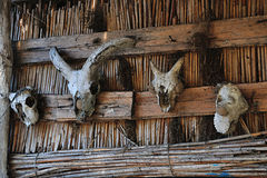 Trophies. Trophy animal skulls on a cane wall Royalty Free Stock Photos
