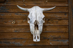 Trophy animal skull hanging on wooden wall Royalty Free Stock Photos