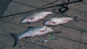 Trophy asps and spinning on a wooden pier