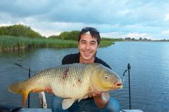 Trophy carp Royalty Free Stock Image