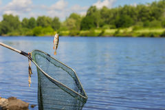 Trophy fishing. Small fish on fishing line, an old fish landing net, sunny landscape with water. Concepts fortune. Trophy fishing. Small fish on fishing line, an Royalty Free Stock Photo