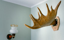 Trophy of the hunter - a horn of an elk. It is presented as an i Royalty Free Stock Photos