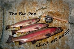 Trophy Trout Catch. Composite image of three Rainbow Trout and the handle and reel of a fly rod portrayed on a yellowish rock face with quote reading: The Big stock illustration