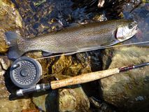Trophy Trout Caught on a Flyrod Stock Photo