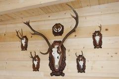 Trophyes dei cacciatori sulla parete di fama Immagini Stock Libere da Diritti