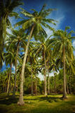 In tropic Royalty Free Stock Photos