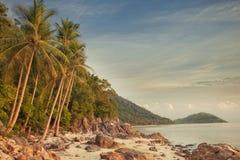 Tropic Royalty Free Stock Photo