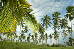tropic στοκ εικόνες με δικαίωμα ελεύθερης χρήσης