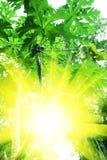 tropic στοκ εικόνες