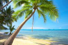 Tropic. View of nice tropical empty sandy beach with some palm stock photography