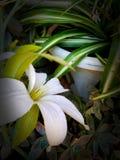 tropic στοκ φωτογραφία