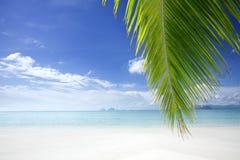 tropic στοκ φωτογραφία με δικαίωμα ελεύθερης χρήσης