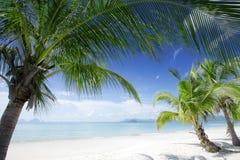tropic στοκ φωτογραφίες με δικαίωμα ελεύθερης χρήσης