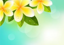 Tropic background with frangipani Royalty Free Stock Images