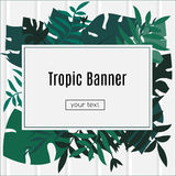 Tropic banner. Design template. Tropical leaves frame with blank space paper. Advertisement, flyer, background. Tropic banner. Design template. Tropical leaves Stock Image