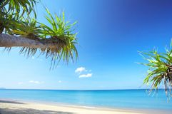 Tropic beach Stock Images