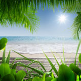 Tropic beach. View of nice tropical beach with some palms stock photos