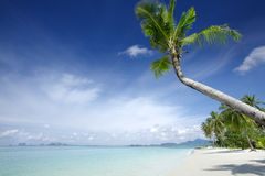 Tropic beach. View of nice tropical beach with some palms royalty free stock images