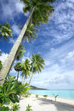 Tropic beach. View of nice tropical beach with some palms royalty free stock photography