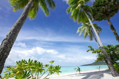 Tropic beach view. View of nice tropical beach with some palms stock images