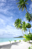 Tropic beach. View of nice tropical beach with some palms royalty free stock image