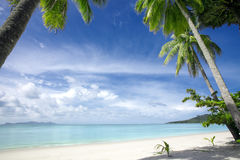 Tropic beach. View of nice tropical beach with some palms royalty free stock photo