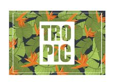 Tropic, bright tropical design with exotic flowers and leaves, trendy summer banner, poster colorful vector Illustration royalty free illustration