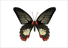 Tropic butterfly 2 Royalty Free Stock Photography