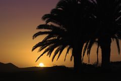 Tropic coconut palm tree silhouette at sunset Stock Images