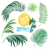 Tropic Collection Stock Image