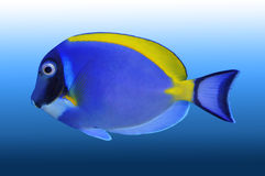 Tropic fish Stock Photos