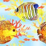Tropic fishes seamless Royalty Free Stock Photography