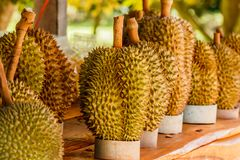 Tropic fruit durian on market table. Stock Photos