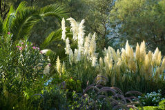 Tropic garden Stock Image