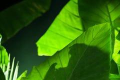 Tropic green Royalty Free Stock Image