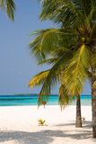 Tropic island. With white sand and palms Stock Photography