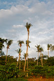 Tropic Jungle Stock Photography