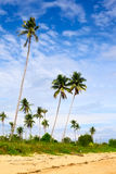 Tropic Jungle Royalty Free Stock Photography