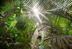 Tropic Jungle Stock Photo
