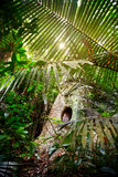 Tropic Jungle Royalty Free Stock Images
