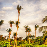 Tropic Jungle Royalty Free Stock Image