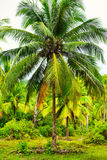 Tropic Jungle Stock Photo