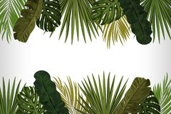 Tropic leaves background with frame for your text. Eps10 vector template. Tropic leaves background with frame for your text. Eps10 vector template Royalty Free Stock Images